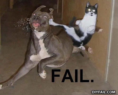 - Ninja cat say *You shall not pass*